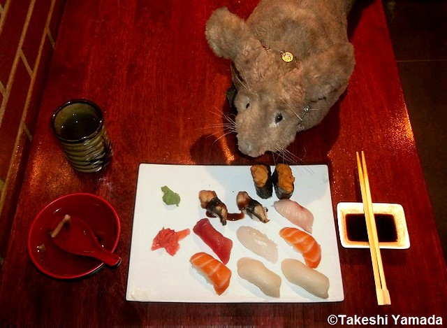 Dr. Takeshi Yamada and Seara (sea rabbit) enjoying dinner at Sake Japanese Restaurant in Brooklyn, New York. This is one of their favorite restaurants in New York City. Sushi and Clear Soup. 20141008 11 084=Cdarker90=5040=