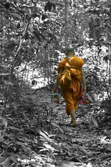 bringing colour into your wilderness ([Len]LingLom) Tags: thailand paint path monk jungle tropical krabi 2015 ประเทศไทย พระ tigercavetemple กระบี่ ป่า watthamsuea วัดถ้ำเสือ changwatkrabi tambonkrabinoi