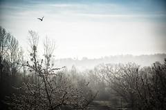morning haze (o_teuerle) Tags: morgen morning morninghaze fog dunst nebel sonne himmel gera thringen lusan geralusan vogel bird landscape landschaft