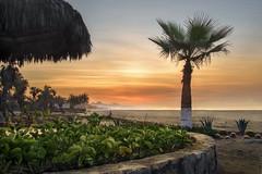 Coral Baja 2016 (David Noll Photography) Tags: coralbaja mexico sunrise beach orange palm planter plants palapala ocean