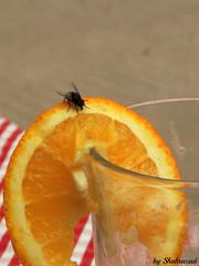Those summerdays (Shahrazad26) Tags: sinaasappel vlieg orange fly appelsien drankje drink jusdorange sinaasappelsap