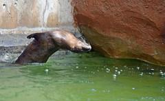 Back Flips (MTSOfan) Tags: riverotter backflip lvz