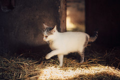 (Just A Stray Cat) Tags: cats film field analog cat 35mm canon 50mm countryside nikon dof bokeh kitty kittens s mm manual nikkor 50 35 depth ai f12 f12s