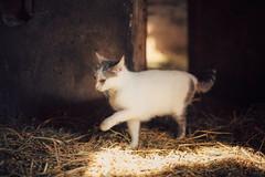 ( Nino) Tags: cats film field analog cat 35mm canon 50mm countryside nikon dof bokeh kitty kittens s mm manual nikkor 50 35 depth ai f12 f12s