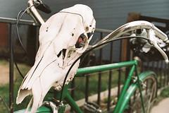 Cow's Skull Rider (yoan.mollemeyer) Tags: skull rider bike portra kodak colorado usa roadtrip ontheroad 35mm film filmisnotdead ishootfilm exposure fineart photography travel voyage