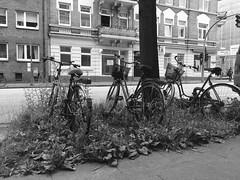 Bicycles (raffaelemariano) Tags: bike bicycle street èparking parking flickrfriday t threeofakind
