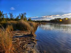 Lake's edge at sunset I (elphweb) Tags: hdr lake shore lakeedge reeds grass sunset water coastal