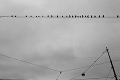 Bird centraal (Elios.k) Tags: horizontal outdoors nopeople birds many sitting wire electricity power lines tram tramlines cable cables row light sky cloudy cloud weather bw blackandwhite monochrome abstract animal stationplein centraal travel travelling december 2015 canon 5dmkii camera photography tourism amsterdam northholland noordholland thenetherlands nederland