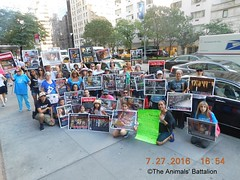 New York, South Korean Consulate General, International Day of Action for South Korean Dogs and Cats (Day 2)  July 27, 2016 Organized by The Animals' Battalion (Koreandogs) Tags: dogmeat animalcruelty boshintang animalabuse gaegogi dogsoju dogelixir southkorea              hyundai samsung lg kia sk daewoo fila koreanairline asianaairline boycott