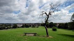 arnos court park (weirdoldhattie) Tags: bristol arnoscourtpark arnoscourtcemetary tree bench park hill widescreen totterdown knowle
