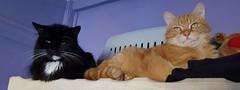 Happy Caturday (Clare_leeloo) Tags: cats cutecat felines