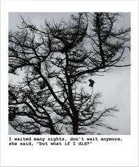Honey Magnolia (Squidge Scicluna) Tags: gaslight anthem honey magnolia arran scotland tree nature shoes lost abandon