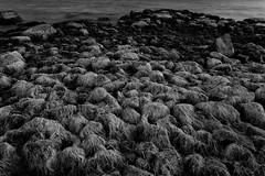 Stones after sunset (Jukka M.) Tags: mellsten espoo water autumn seaside shore night blackandwhite monochrome outdoor texture