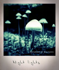 Nachtlichter (NatureArt by Wolfgang) Tags: pilze wald boden instant polaroid sigma dp2 herbst autumn fall mushrooms fungus