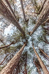 DSC_1274 (Andrew J Horrocks) Tags: formby pinewoods freshfield liverpool trees