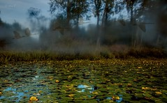 Dreamland (Test Pics.) (Photo Alan) Tags: birds water forest lake trees landscape test vancouver autumn canada outdoor mist serene foliage plant
