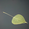without prejudice (szélléva) Tags: abstract autumn colours fall water simplicity leaf prejudice minimalism square