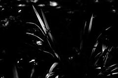 black & white - 2 (alice.decoorebyter) Tags: naturalworld naturephotograph naturepics nature beautiful beauty beautyinnature