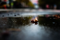 cream (ewitsoe) Tags: leaf road bokeh sharpfocus centered city urban ewitsoe nikond80 poland poznan autumn