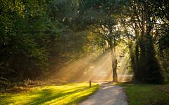 Rays of Autumn (romanboed) Tags: leica m 240 summilux 50 autumn fall europe holland dutch park wassenaar afternoon sunlight rays light path mist forest wood