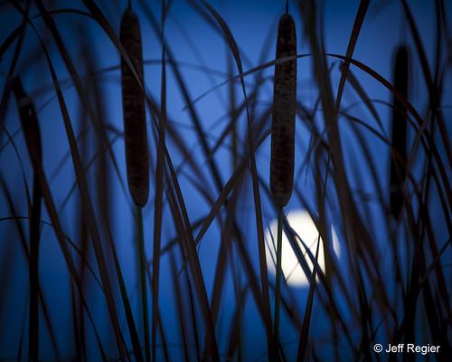 Photo - Jeff Regier - Blue Moon - Runner Up - Scenery