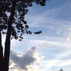 Per quello che ho vissuto io... (simoneaversano) Tags: trees sky tree nature clouds u2 timelapse video poetry wind bluesky poesia cloudporn clearsky movingpicture naturelovers movingclouds treeporn treelovers thewind blowingwind songsofinnocence poetography skyporn skylovers cloudlovers latergram uploaded:by=flickstagram vidstagram irisholdmeclose instagram:venuename=viaraffaeledelcogliano instagram:venue=57981742 instagram:photo=843431289827038225247096476