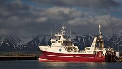 Dalvik Harbour (heikole-art.net) Tags: ocean sea mountain berg island boot see boat iceland meer harbour hafen schiff soe autofocus ozean greatphotographers dalvik vividstriking heikole