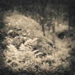 Spy (gaubitsa) Tags: 6x6 forest landscape russia hasselblad softfocus monocle vyborg meniscus monrepos pictorialism viipuri выборг монокль монрепо пикториализм