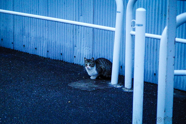 Today's Cat@2015-02-17