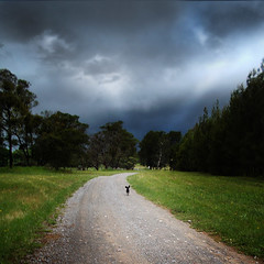 Fleeing the Storm (caralan393) Tags: road sky clouds square running poodle bella strom flee