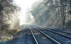 INTO THE LIGHT CAPTURE ONE (jdoakey) Tags: morning shadow sunlight mist beautiful train haze ray shadows gorgeous tracks rail railway eerie line rays flickraward5