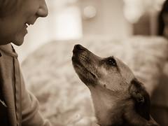 unconditional (BPPrice) Tags: portrait dog sepia heidi brandonprice