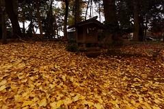 Katoridai Shrine (Matthias Harbers) Tags: old city urban tree leaves japan photoshop town nikon shrine raw nef v3 chiba elements labs dxo nikkor shinto topaz autunm nagareyama nikkorlens nikon1 1nikkor6713mmf3556vr nikon1v3 nikonv3 katoridaishrine