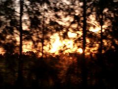 Proyecto mi casa (LucreciaOh) Tags: trees sunset argentina atardecer movement rboles movimiento campo provincia viajar