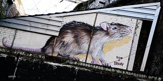 rat des villes !!!!!!