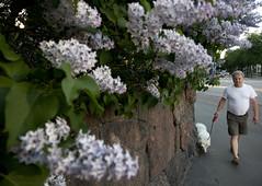 (heikki.lindgren) Tags: street helsinki streetphotography hietalahti