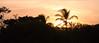 #Alone #in_the #Paradise (roizroiz) Tags: trip summer tree interestingness palm mothernature horizons beautifulsunset interesantísimo sunsetsunrisesunprettybeautifulredorangepinkskyskyporncloudpornnaturecloudshorizonphotoofthedayinstagoodgorgeouswarmviewnightmorningsilhouetteinstaskyallsunsets