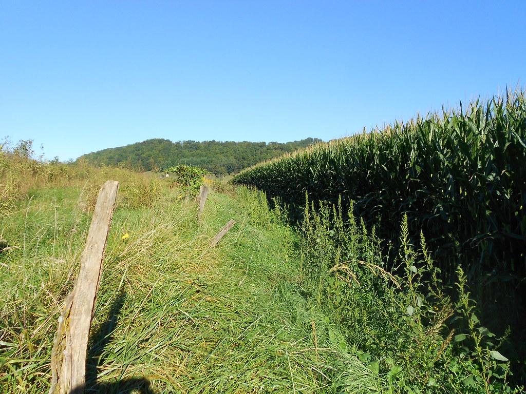 Old fenceline