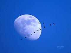 #New #horizons Explore #07  March 17/2015 (roizroiz) Tags: life new trip blue sky moon art birds composition interestingness perfect flickr artistic explorer planet yesterday today mothernature 07 horizons i500 interesantsimo 20150317 cloudscloudcloudpornweatherlookupskiesskyporncloudyinstacloudinstacloudsnaturebeautifulgloomyskylinehorizonovercastinstaskyepicskyphotoofthedaycloudskyeskybackskyloversiskyhub