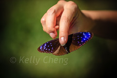 Taiwan-121113-235 (Kelly Cheng) Tags: travel color colour green tourism nature animals horizontal fauna butterfly daylight colorful asia day taiwan vivid colourful traveldestinations  northeastasia