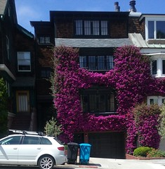 First Bay Tradition (sftrajan) Tags: sanfrancisco california flowers house architecture bougainvillea cowhollow unionstreet firstbaytradition unpaintedshingles 2850unionstreet