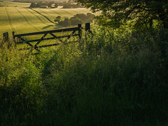 Chiltern Gateway (Damian_Ward) Tags: morning photography gate chilterns buckinghamshire ivinghoe ivinghoebeacon thechilterns chilternhills damianward ©damianward