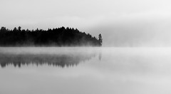 Tree point (Daren N.) Tags: algonquinpark ontario canada canisbay lake fog mist tree reflection bw pine