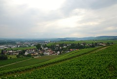 Blick nach Geisenheim (chipmonk) Tags: 2016 rheingau riesling johannisberg