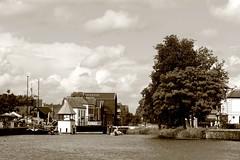 Dragon Boat Festival 2016, Apeldoorn (RW-V) Tags: monochrome sepia canal nederland thenetherlands rowing dragonboat paysbas apeldoorn niederlande gelderland 100faves 80faves drakenbootfestival canoneos60d canonef100mmf28lmacroisusm apeldoorncanal apeldoornschkanaal