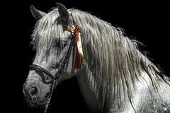 CABEZA DE CABALLO (alfrelopez) Tags: animal caballo nikon cabeza alfredo equino sigma18200 alfrelopez