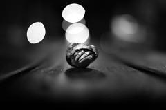 Drle de rencontre (Mathieu Thiebaut | http://www.mathieuthiebaut.com) Tags: pagou bht flickr explore blackandwhite noiretblanc bw nb noir blanc outdoor animal coenobita banc bench night street