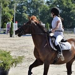 DSC_1021 (2) (ploufjf_64) Tags: paus show jumping chevaux pau 2016