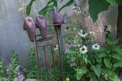 IMG_7814 (ElsSchepers) Tags: limburglavendel lavendelhoeve stokrooie kuringen hasselt natuur vlinders