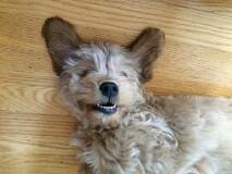 Love Charlie's smile!  He is one of Dakota and Nolan's sweet boys!